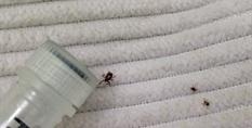 Ticks on cloth